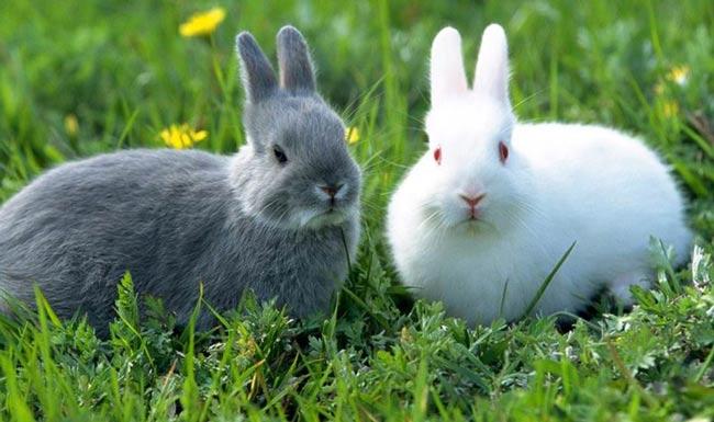 Как мой сын написал сочинение про зайцев